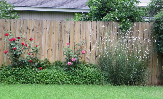 Backyard Fence and Flowers