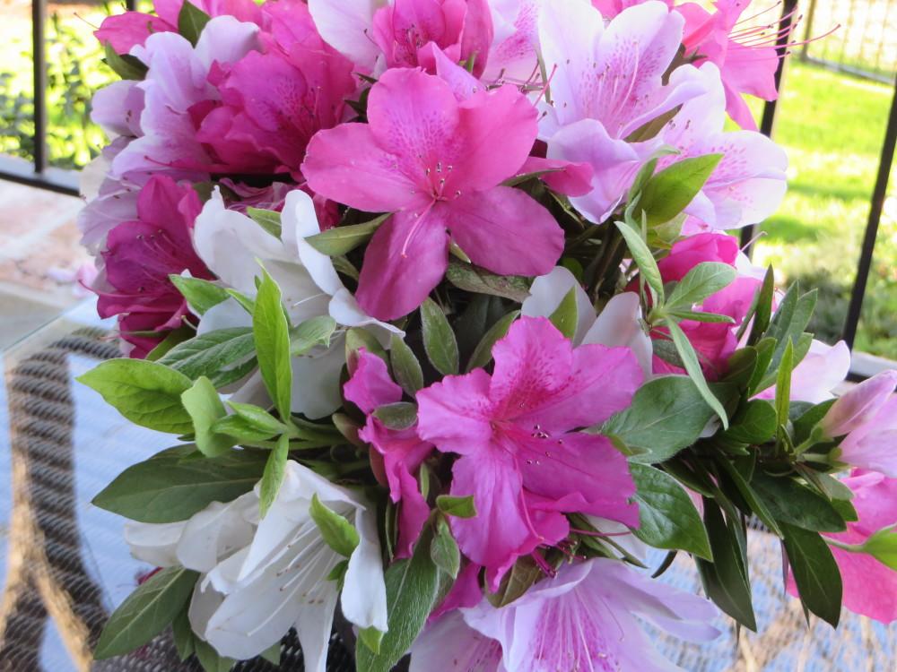 Azalea Trail Azalea Bouquet